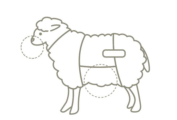 ラム肉の部位オファール (内臓)