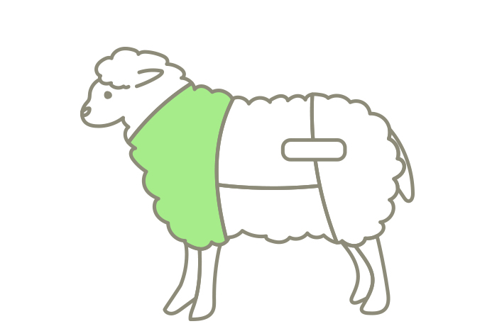 ラム肉の部位ショルダー(カタ)