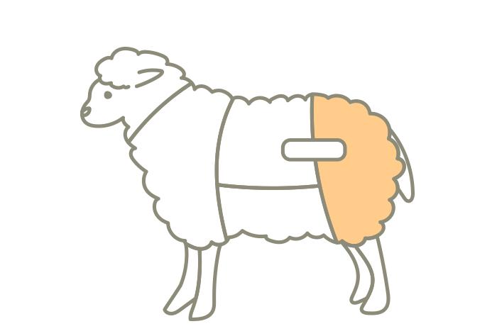 ラム肉の部位レッグ(モモ)