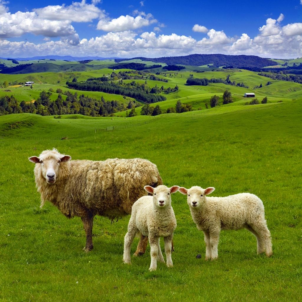 ニュージーランドのおすすめお土産6選!たくさんの人へのプチ土産から特別な人への贈り物までご紹介